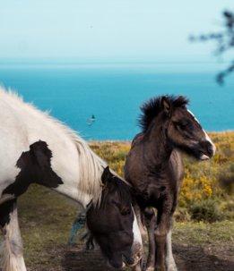 Conero a cavallo - The Market San Marino Outlet Experience
