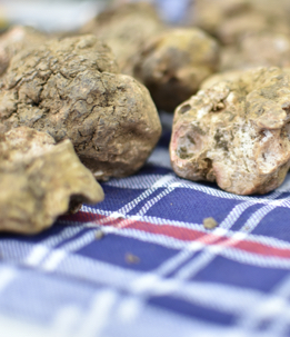 Ricerca tartufi - The Market San Marino Outlet Experience